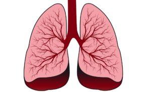 Альвеококкоз легких: причины и симптомы, диагностика и лечение, возбудитель заболевания