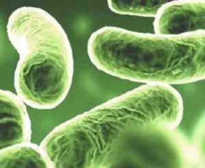 Анализ на хламидии - диагностика хламидиоза: как сдавать тест мужчинам и женщинам, подготовка, лабораторное обследование, расшифровка показателей
