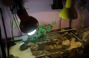 Борьба с нитчаткой в аквариуме: как избавиться, причины, применение перекиси водорода