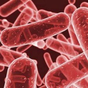 Факультативные паразиты и разновидности факультативного паразитизма у человека