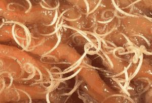 Облигатные внутриклеточные паразиты в организме человека