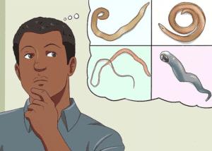 Симптомы и признаки ленточных червей у человека: класс, общая характеристика и отличие проявлений паразитов, лечени