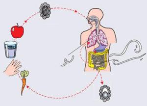 Таблетки Вермокс: инструкция по применению, аналоги препарата, помогает ли при глистах